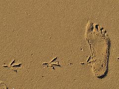 sign-of-footprint.jpg