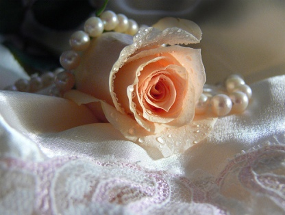 rose-in-white-satin.jpg