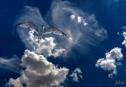 seagul.jpg