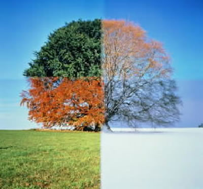 seasons-of-life-large
